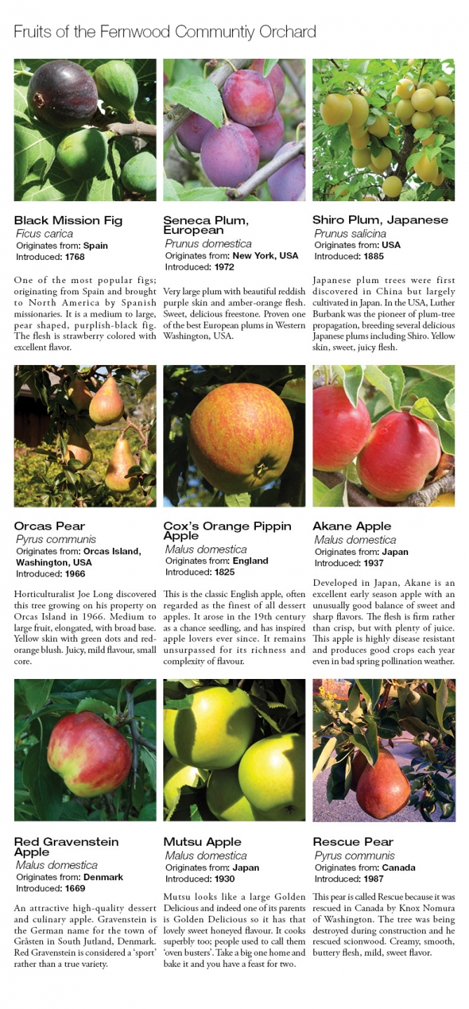 Fruits of the Fernwood Community Orchard