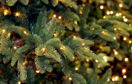 Tree and Lights