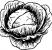 SauerkrautWorkshop_Cabbage