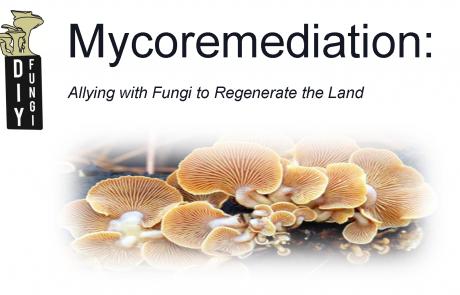 Mycoremediation-DIYFungi-FernwoodNRG-Victoria-Header