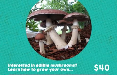 MushroomWorkshop_FernwoodNRG_2016-01