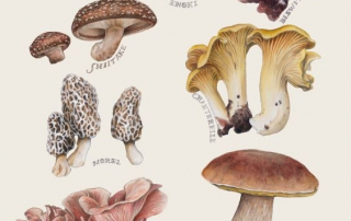 Edible Mushroom Catalog