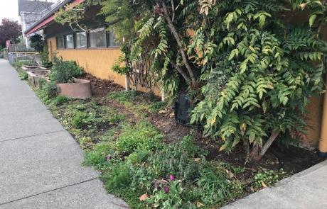 Fernwood-Community-Centre-Kitchen-Garden