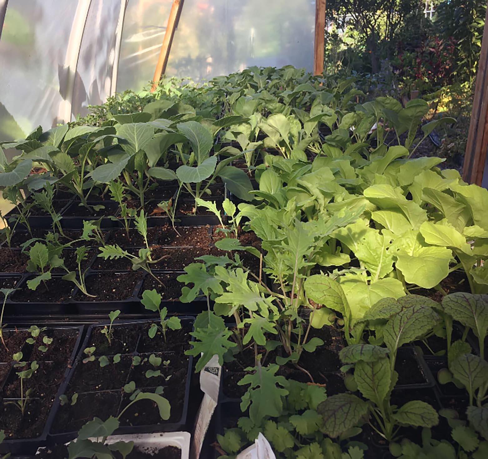 August Organic Plant Sale 2019