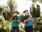 Community-Garden-VV