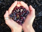 Seeds - Kayla Seifried