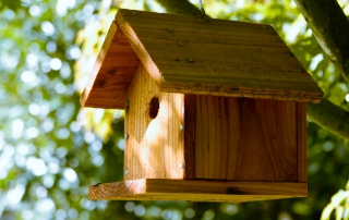 Birdhouse - Photo: Taylor Foss