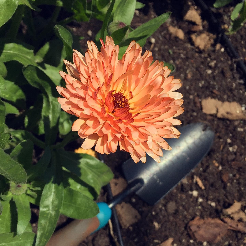 Fernwood NRG June 2021 Garden Work Party