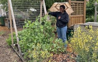 Peas in the garden - Kayla Siefried